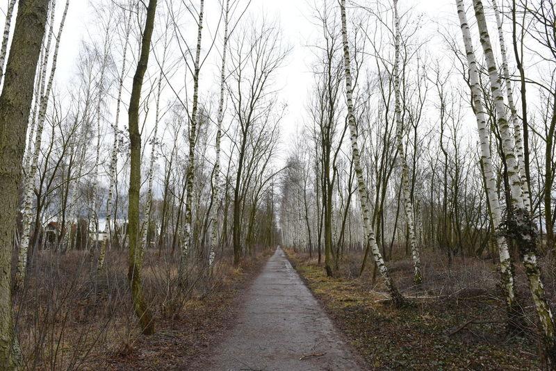 Berlin Birken Low Angle View Mauerstreifen Mauerweg Nature Outdoor Photography Outdoors Sky Tree Trees Trees And Sky