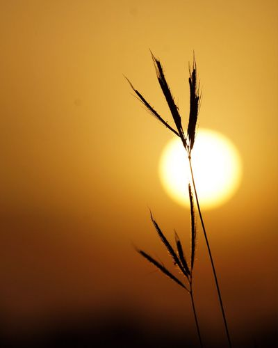 Silhouette Sun Fields