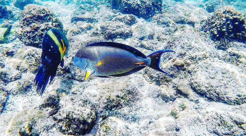 Fish One Animal Animal Themes Sea Life Animals In The Wild Underwater UnderSea Nature No People Animal Wildlife Sea Water Multi Colored Day Swimming Outdoors Beauty In Nature Close-up