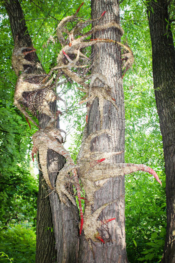 Beauty In Nature Branch Day Deciduous Tree Forest Growth Nature No People Outdoors Root Tree Tree Trunk