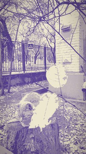 Коты котэ настроение осень2017 городскаясреда вгороде Персонаж Animals Autumnmood Autumn Leafs Creative арт  артфото Mood Captures Nature_collection Day Outdoors No People Architecture Nature Close-up