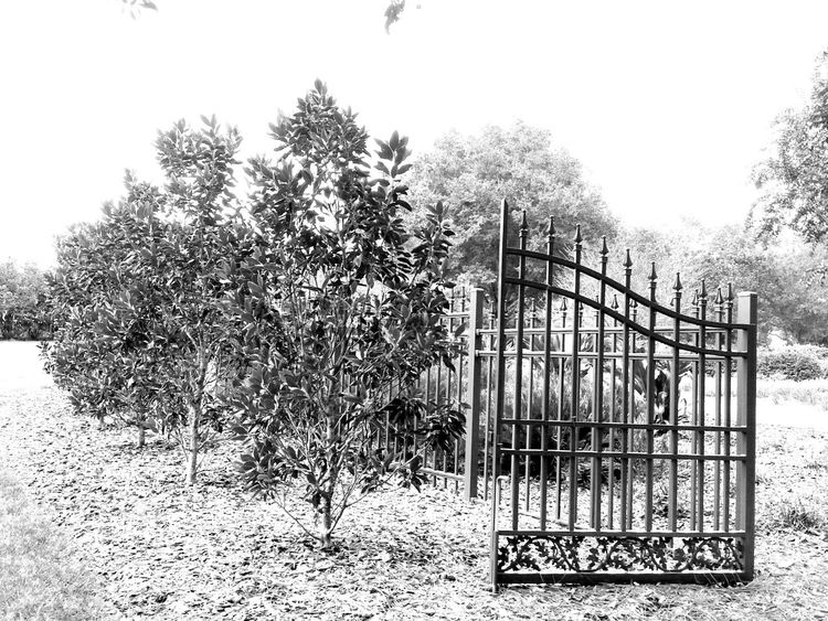 Darkside collection Absence Darkside Day Enter Fence Front Or Back Yard Gates Green Green Color Growing Growth Leaf Narrow Outdoors Park Plant Potted Plant Protection Railing Safety The Way Forward Tree Tree Trunk B&w Street Photography