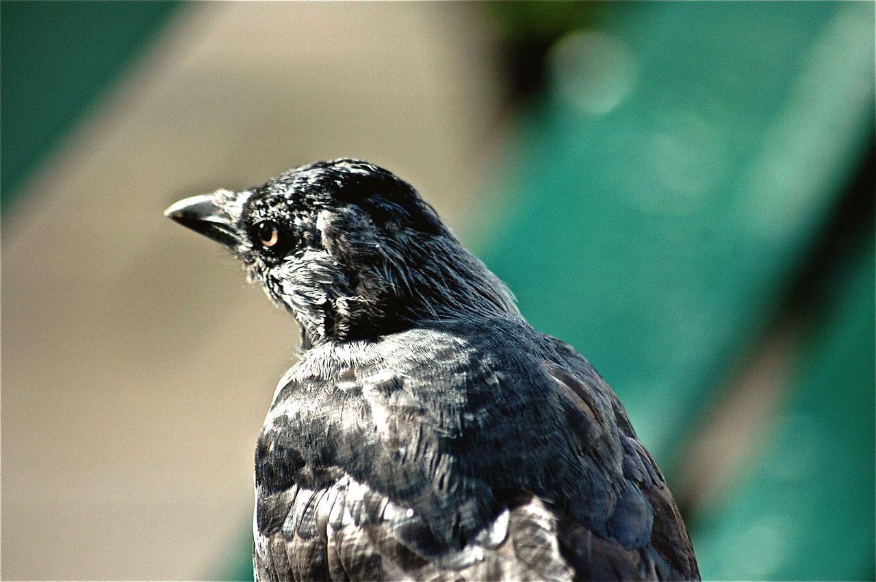 bird, one animal, animals in the wild, animal themes, focus on foreground, animal wildlife, nature, close-up, day, no people, beak, outdoors, bird of prey, perching