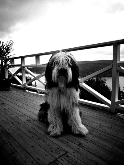 Lemmy Dog Blackandwhite Eyem Black And White Portrait Beardiss