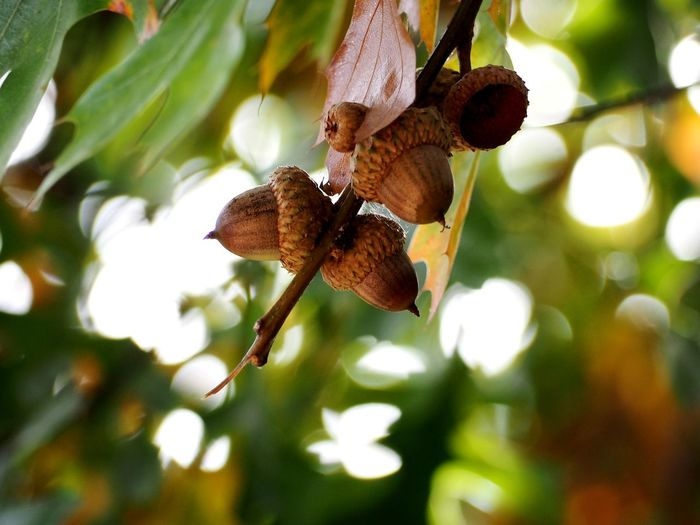 Tree Hanging Leaf Insect Branch Close-up Animal Themes Blooming Buzzing Pollen