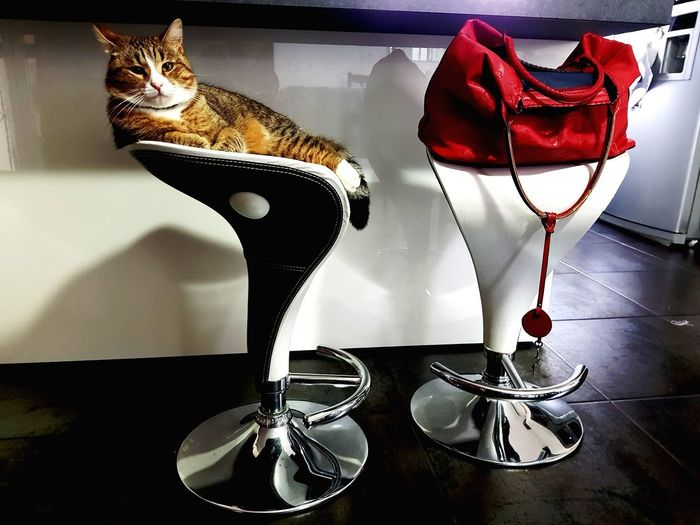 Un Gatto Soprammobile 😍😍 Cat Catlovers Eyemcat Table Fashion Bauble
