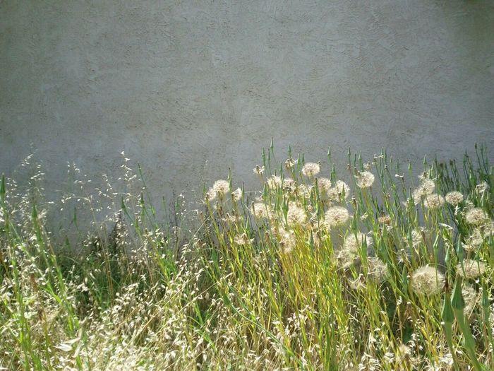 Flowers blooming in field