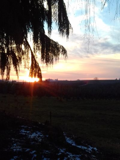 Sunset Nature Tree Beauty In Nature No People Sky Outdoors Scenics Rural Scene Winter Sky Sunbeam Dusk Cloud - Sky Branch Beauty In Nature