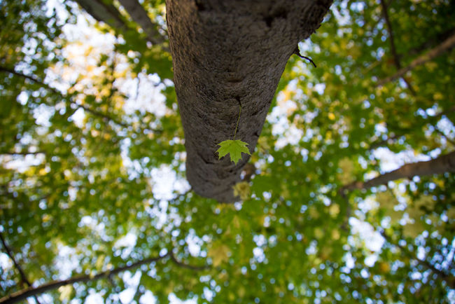 Forrest Photography Nature Photography Animal Themes Beauty In Nature Branch Close-up Day Focus On Foreground Forest Forest Photography Forrest Green Color Growth Leaf Leaves Low Angle View Nature No People Outdoors Tree Tree Trunk