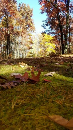 Rest Area On I-64 Trees Beauty In Nature Nature Lover Colorful View Ground Level View Fall Season Leaves Yellow Color Orange Color Green Grass Outdoors In The Woods Quiet Places Silent Nature Scenic Beauty Sky And Trees Enjoying Nature Nature Walk The Secret Spaces