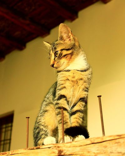 Low angle view of a cat looking away