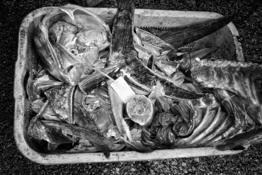 Animal Basket Black And White Bones Close-up Day Dead Dead Animal Death Environmental Issues Fish Fish Monger Fish Trash Fisherman Japanese Culture Japanese Food Left Overs No People Outdoors Over Fishing Skellet  Throw Out Tokyo Fishmarket Trash Waste