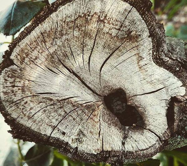 Pruned Branch Cut Wood Nature Wmm_brown