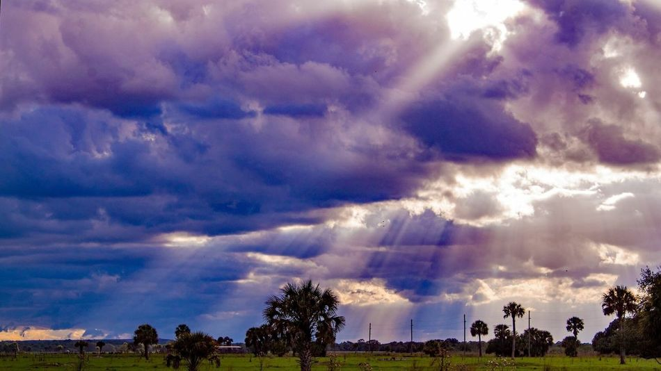 Rays of Hope Cloud - Sky Sky Beauty In Nature Nature Scenics Tree Storm Cloud Day Outdoors Thunderstorm No People