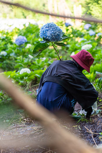 Back Hydrangea Flower Rear View Hydrangea Agriculture Garden One Person Real People Plant Day Selective Focus Nature Land Growth Hat Lifestyles Men Adult Farm Side View Field Casual Clothing Leisure Activity Outdoors Farmer Obscured Face
