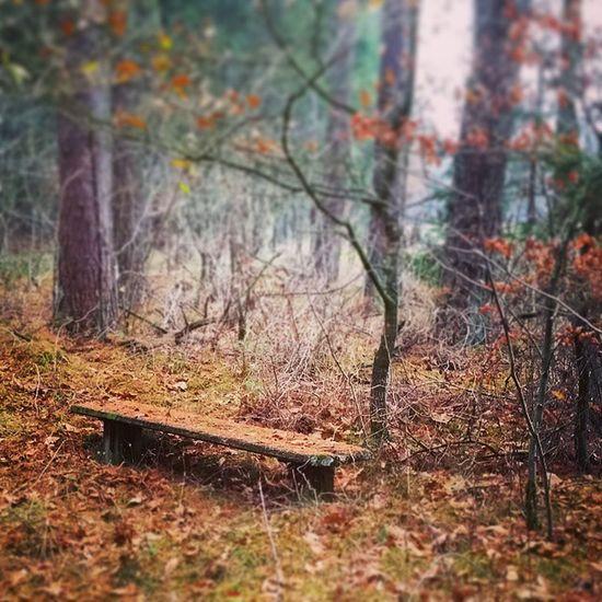 Pause im Wald Natur Lüneburgerheide Wald Undeloh