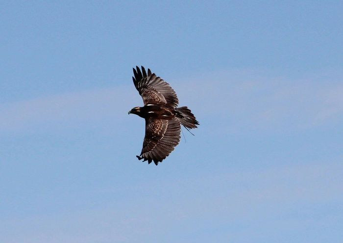 Birds Birds Of Prey Birds In Flight