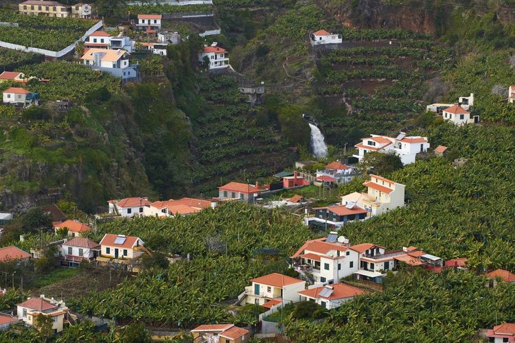 View from Miradouro da Torre viewpoint of a village in Madeira with a waterfall Madeira Travel Island Portugal Portuguese Europe Camara De Lobos Nature Landscape Panorama Panoramic Outdoors Waterfall Bananas Trees Houses Village Architecture Aerial View Aerial Mountain Viewpoint Miradouro Scenics Funchal