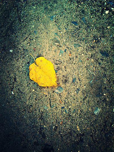 Vida después de la vida. Amarillo. Hojas Secas Hdr Edit Poesia Urbana