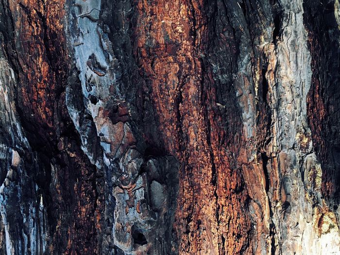 Textured  Tree Trunk Trunk Backgrounds Tree Full Frame Close-up Rough Plant Bark Wood - Material Pattern No People Weathered Brown Plant Nature Natural Pattern Day Outdoors Wood Bark Textured Effect Structure Of Time Beautiful Bark