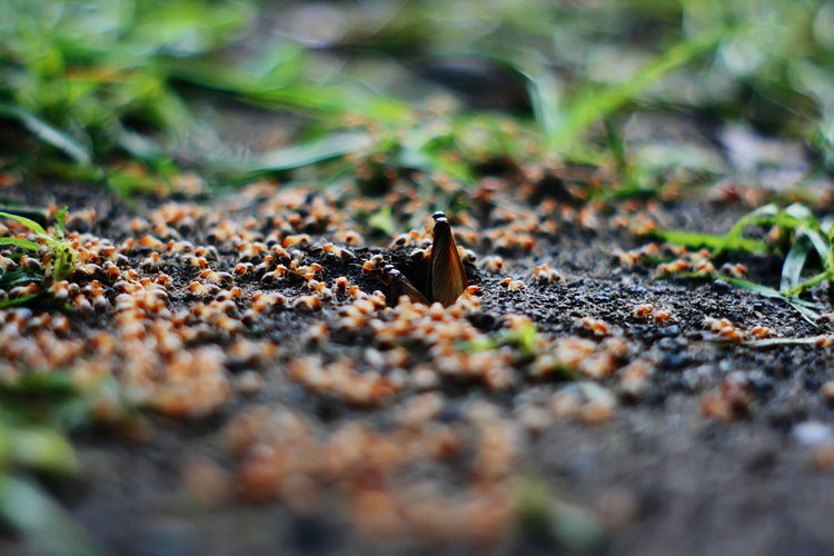 Flying termites Flying Termites Animal Ant Beauty In Nature Close-up Day Falling Field Growth Invertebrate Land Leaf Nature No People Outdoors Plant Plant Part Selective Focus Sunlight Surface Level Termites Tranquility