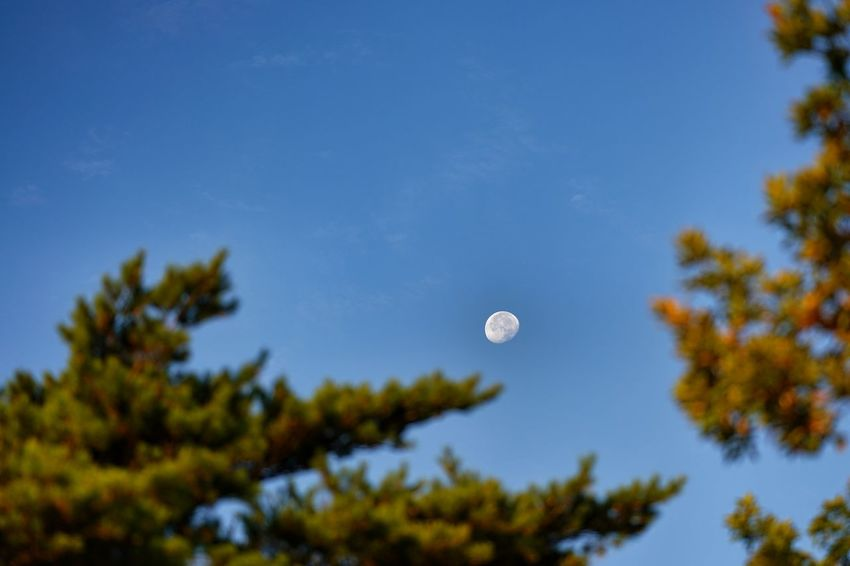 Capture The Moment Day Photography Themes Moon Selective Focus Depth Of Field Blue Sky Clear Sky Beauty In Nature Scenics Tree Nature Taking Photos Backgrounds Fragility Fine Art Photography Getting Inspired Close-up Full Frame Detail Sony A7RII Sigma EyeEm Best Shots 17_10 EyeEmNewHere