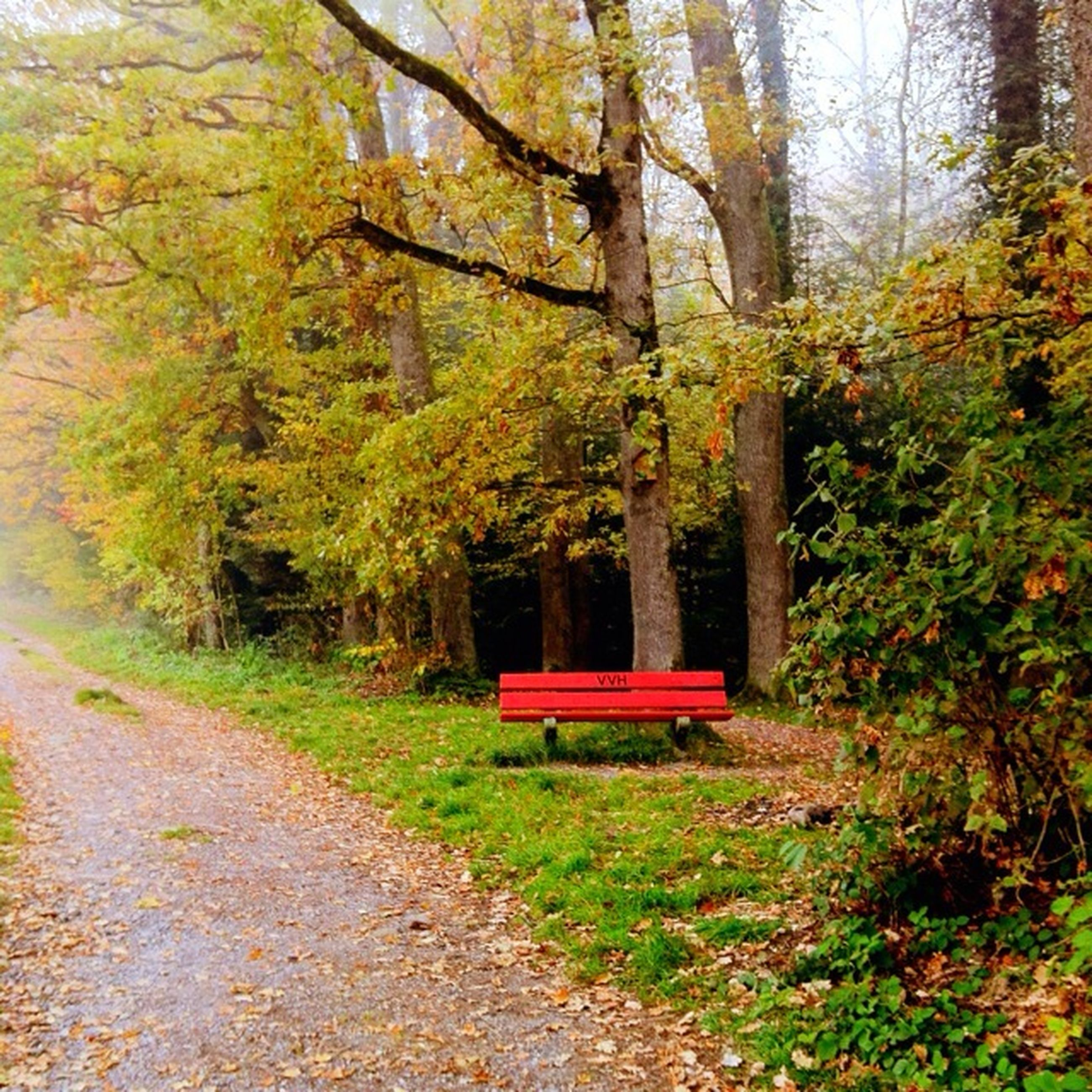 tree, empty, tranquility, the way forward, bench, absence, growth, green color, nature, forest, tranquil scene, day, beauty in nature, footpath, grass, no people, outdoors, plant, tree trunk, red