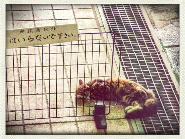 セーフティゾーン Cat 山寺 Cat♡