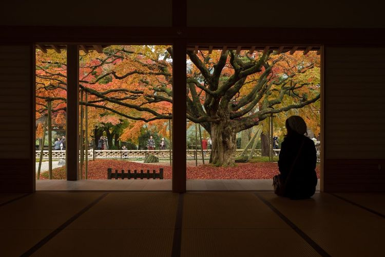 Traveling Home For The Holidays Tree Autumn One Person Nature Beauty In Nature Autumn Leaves Japan Japanese Garden My Favorite Place Eye Em Nature Lover