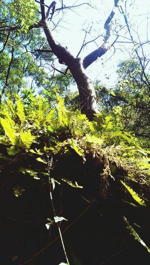 Explora Energias Senor árbol