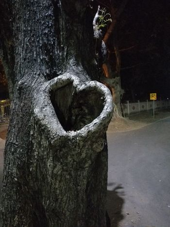Close-up Day Heart Shape Heart ❤ Nature No People Outdoors Tree Tree Trunk Water