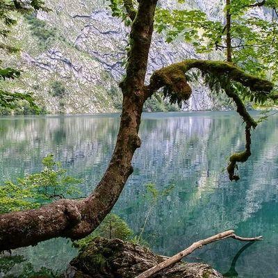 Tree at the lake