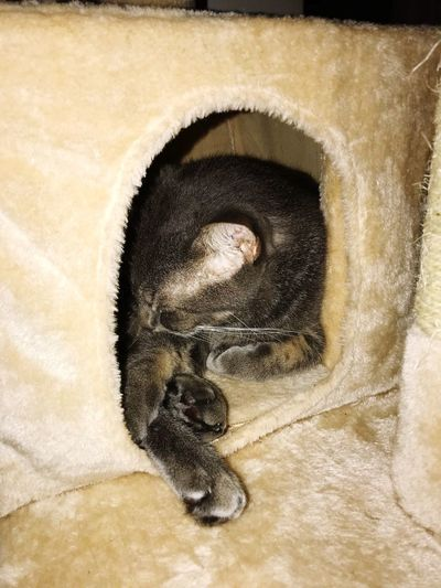 Sleepy kitty If I Fits I Sleeps One Animal Animal Themes Mammal No People Close-up Indoors  Relaxation