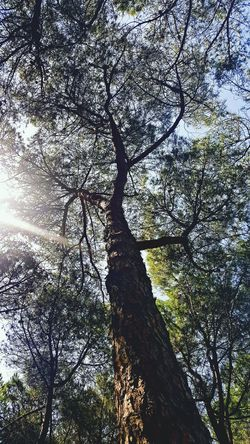 Low Angle View Tree Branch Scenics Growth Nature Tranquility Beauty In Nature Tree Trunk Directly Below Tranquil Scene Day Sky Majestic Outdoors Tall - High Full Frame Tree Canopy  Non-urban Scene Tall Long Tree Photography Tree Photography Nature_collection Naturephotography
