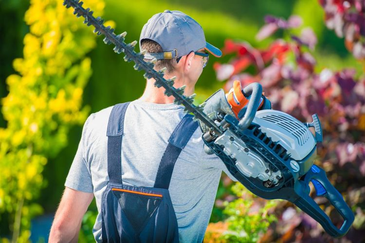 Man carrying hedge trimmer