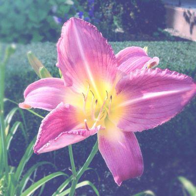 Flowers Outdoors Hipstamatic Hipstamaticaddicts