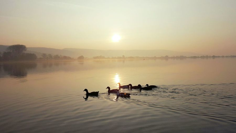 Ducks at the Reservoir in Somerset , England How Do We Build The World? Showcase March Ducks Sunrise Sky And Clouds Sky Water Reflections Water Sun Enjoying The View Taking Photos Quiet Moments Landscape Photography In Motion Landscapes With WhiteWall Here Belongs To Me Capture Tomorrow