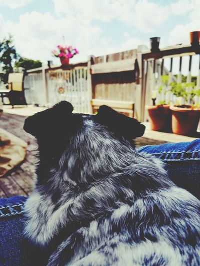 Day No People Sky Outdoors Close-up Animal Animal Love Perspective View Relaxing Moments Pet Companionship Companion Dog Companionship Low Angle View Lawn Chair Perspective Backyard Back Deck View Breathing Space Pet Portraits