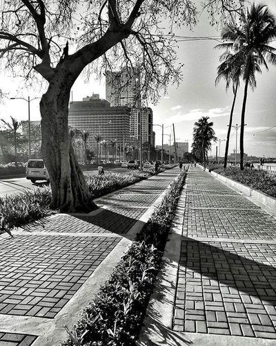 Beautiful landscaping Apec2015ph PhotobyFlash Letsmobigraph Flashview FlashPilipinas FlashPhilippines Manila Philippines Baywalk RoxasBlvd Sidewalk Urban The Street Photographer - 2016 EyeEm Awards