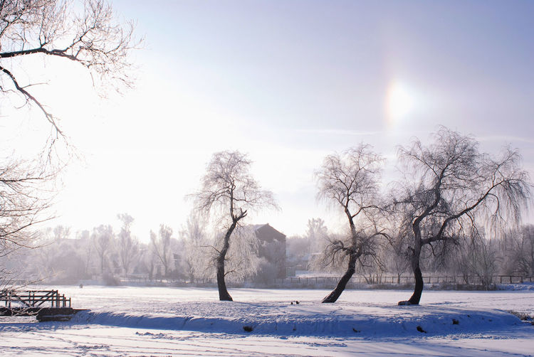 Minsk, Loshica Park Frozen Winter Beauty In Nature Cold Temperature Galo Nature Snow Weather