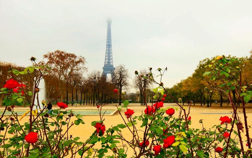 Roses_collection Eiffel Tower Landscape_photography Traveling Photography Traveling