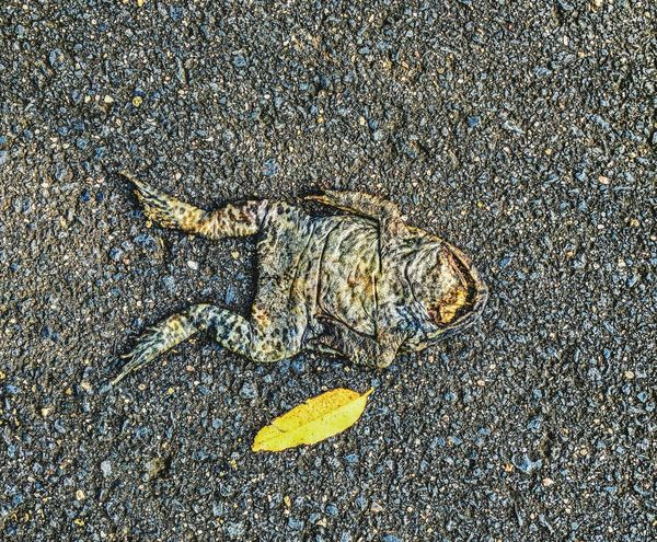 Art Is Everywhere death Fragility Outdoors Textured  No People