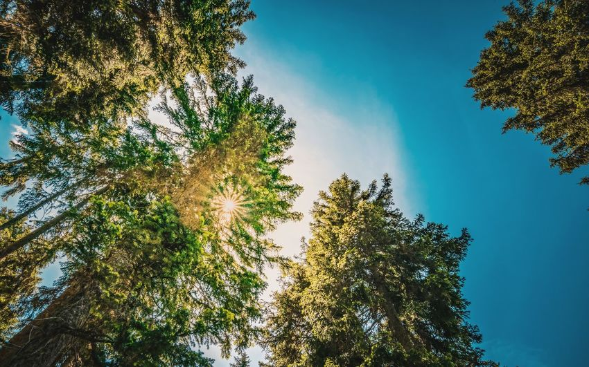 sunny day Tree Sun Sky From Below From My Point Of View Colors Nature Sunlight Sunshine Sun_collection Forest Scenics Scenery Tranquility Tranquil Scene