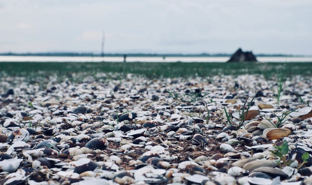 shell Pebble Outdoors Tranquil Scene Stone - Object Tranquility Sea Sky Solid Stone Beauty In Nature Focus On Foreground Scenics - Nature Surface Level