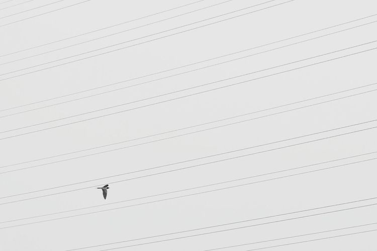 Low angle view of bird flying over electricity cables against clear sky
