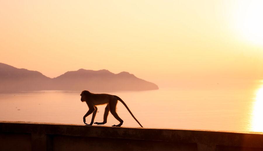 Sea-monkey