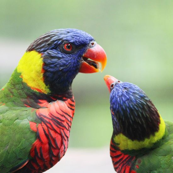 Close-up of parrots outdoors