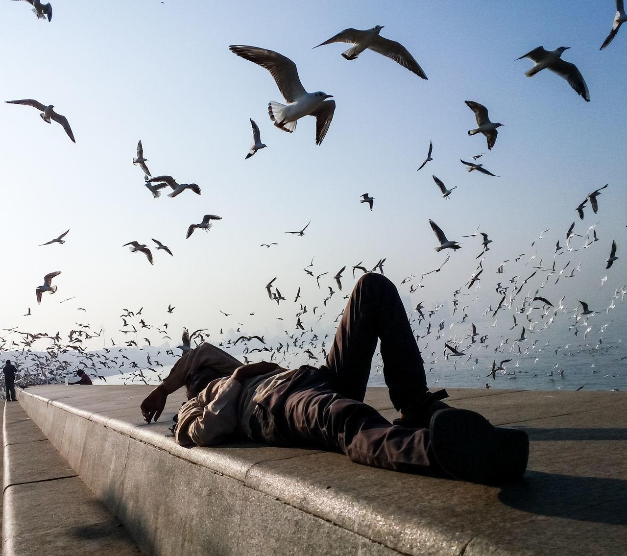 FLOCK OF BIRDS AGAINST SKY