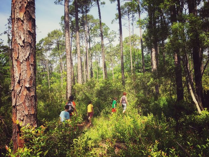 Friends walking amidst trees in forest