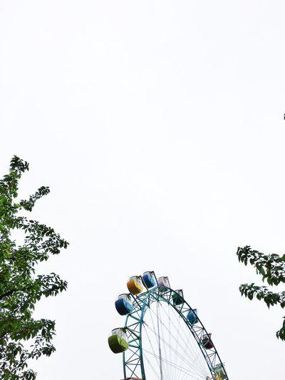 Amusementpark Park Tree Trees